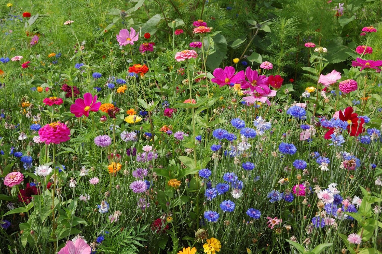 Perennial/ Annual Wildflower Seeds Bulk USA Produced