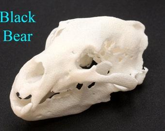 Animal Skull - Black Bear Skull 3D Printed Skull - Educational Skull Collection - Science Biology Gift