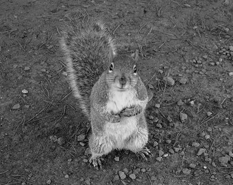 Nature Photography 10x8 Hopeful Wild Squirrel