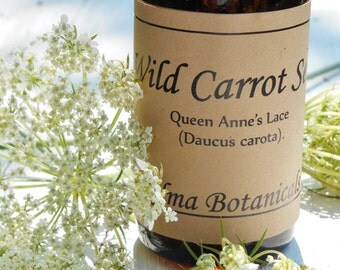 Organic Wild Carrot seed  (Queen Anne's Lace) herbal extract tincture