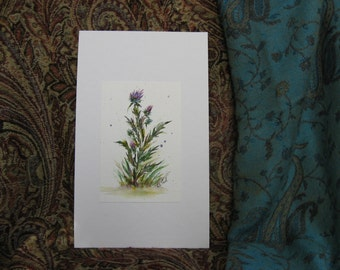 Scottish Thistle Painting in Watercolor Pen & Ink (1174)