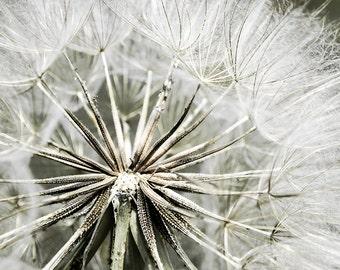 Dandelion, Macro Photography, Nature Photography, Flower, White, Modern, Botanical, Large Wall Art, Home Decor, Fine Art Print