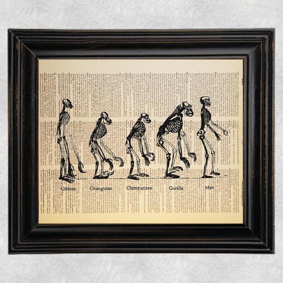Man Evolution Chart
