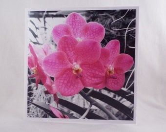 Splash of Colour: Pink Orchids (Square Blank General Use Card)