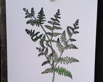 Fern no. 2 Drawing, Watercolor, reproduction from original drawing