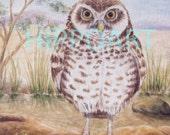 Southwest Desert BURROWING OWL Greeting Card
