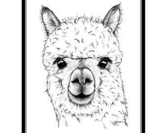 Alpaca 8 X 10 Signed Giclee Fine Art Print
