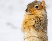 Brrrrrrr It's Cold Out - Squirrel Photo - Winter Humor - Snow - Animal Photography