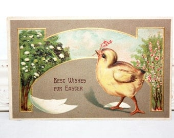 Vintage Easter Postcard Embossed of a baby yellow chick with pink flowers in it's beak with white eggshells around The Rotograph Co 1910