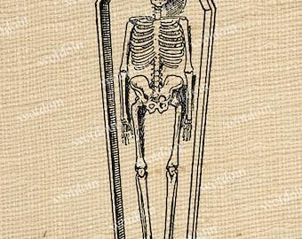 Skeleton Bones Coffin Anatomy Corpse Dead Guy Casket Halloween Image Transfer Digtial Download Printable
