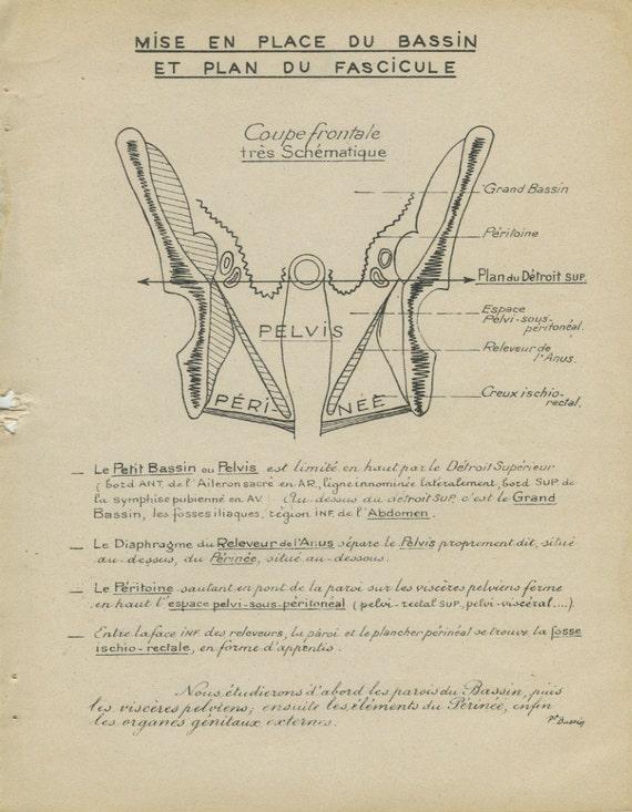 human anatomy print 1947 diagram of pelvis 1 pelvic bones. Black Bedroom Furniture Sets. Home Design Ideas