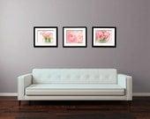Flower Photo - Flower Photography - Ranunculus Photo - Set of Three (3) Photos - Fine Art Photography Prints - Pink Teal  Home Decor