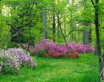 Bryan Park Azalea Flower Garden Landscape, Gardens at Bryan Park in Richmond Va. Photo Art, 8x10, Framed Photography Option