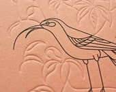 Extinct Collection - Notebook no.1/2/3