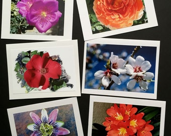 Nature in Bloom Note Cards