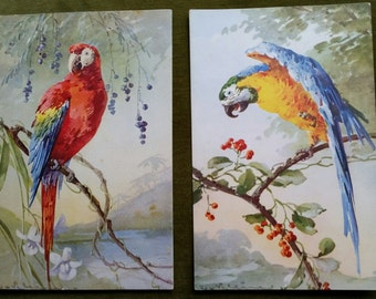 Catherine Klein, Vintage Parrots