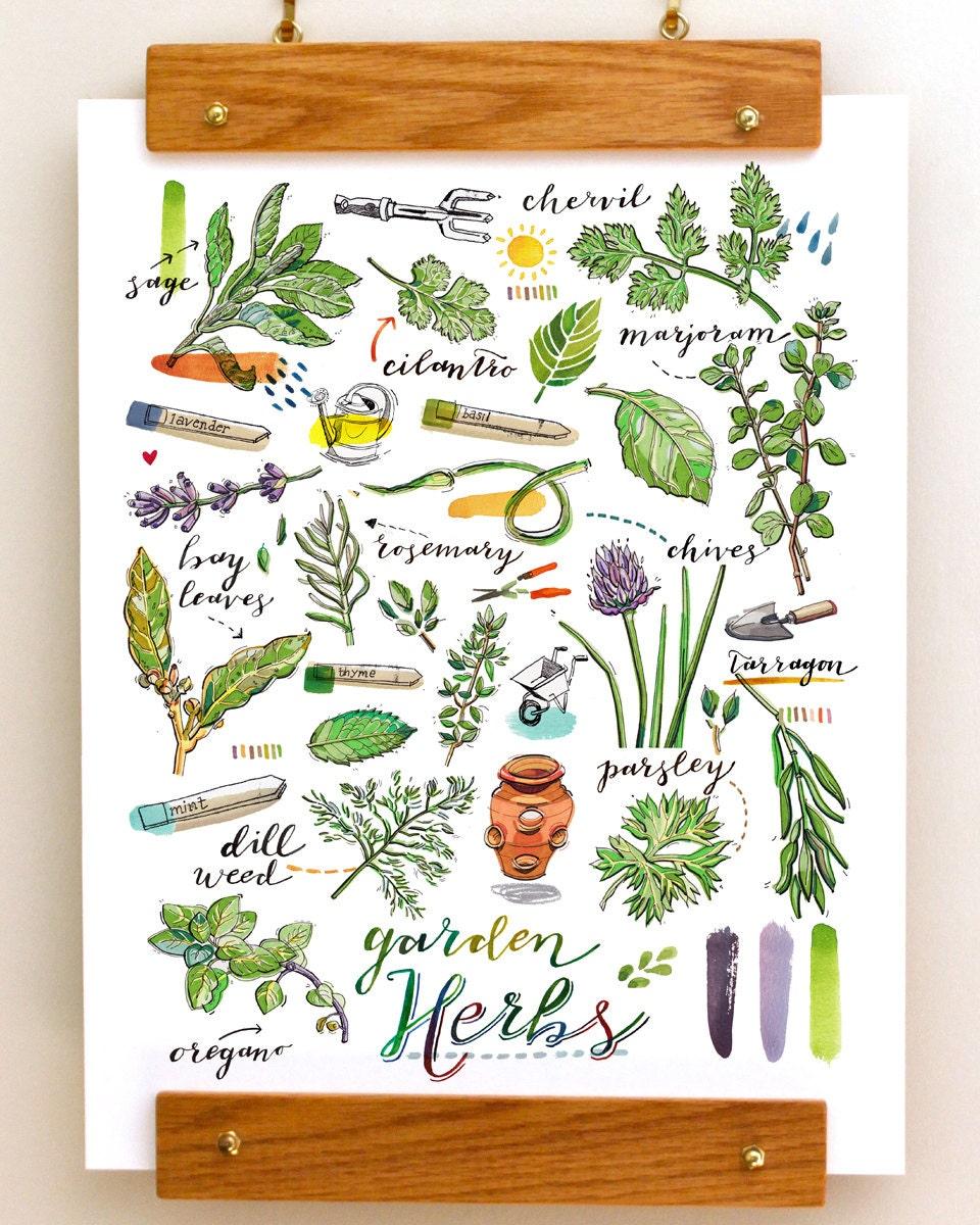 Kitchen Herb Gardens That Will Make Cooking Wonderful: Herbs Print. Garden. Food Illustration. Kitchen Decor. Spring
