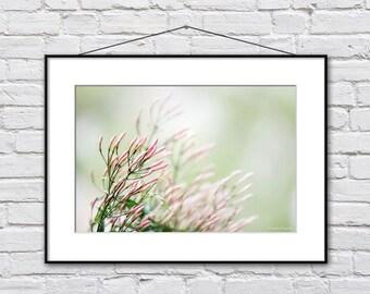 Floral photography - Flower photography print - Flower art print - Pink Green - Wall decor print - Feminine wall art - Pastel bedroom decor