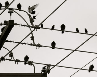 Nature Photography, Bird Photography, Sky, Wire, Black and White, Flight, fPOE, Birds on a Wire