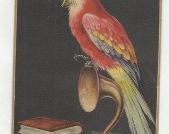 Scarlet Macaw Loud Speaker Bird Print 1888 Original Color Print Natural History Wall Art Home Decor Vintage Print Robin Skylark