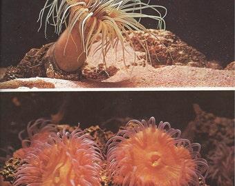 Vintage polyps poster