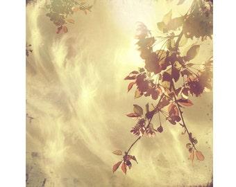 Boho Chic, Dreamy Summer Photography, Tree Art Prints, Vintage Nature Prints, Boho Photos, 8x8 10x10 12x12