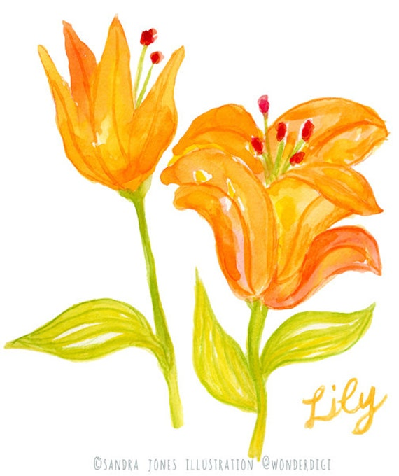 Flowers Similar To Lilies: Items Similar To Watercolor Clipart