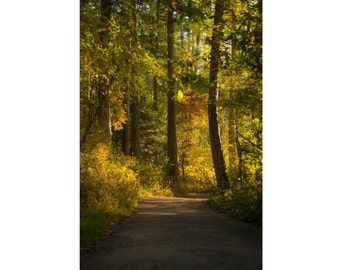 "Forest Path: fine art photography notecard - 5x7"" frameable"