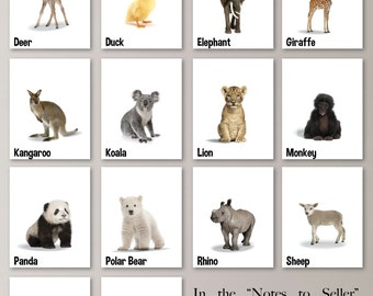 Baby Nursery Print Art - Animal Nursery Decor - Jungle Nursery - Jungle Nursery Art - Baby Animal Photos - Animal Art - Zoo Animals (NS-724)