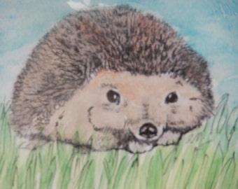 Visiting Hedgehog