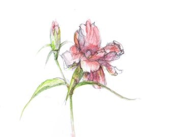 ORIGINAL or ART PRINT  Pink carnation flowers, aquarelle painting, floral art, minimalist modern decoration, fresh style