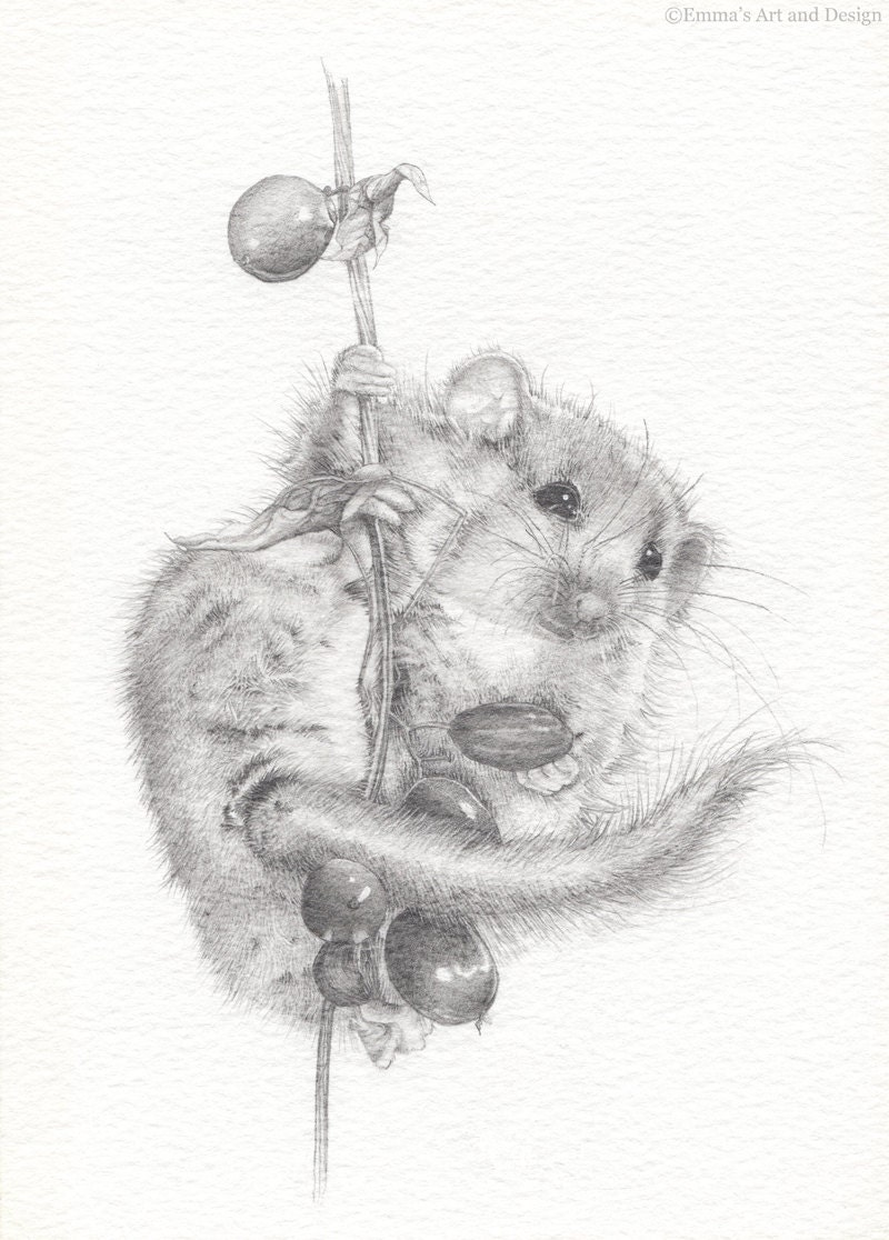 field mouse drawing mounted print of original pencil drawing. Black Bedroom Furniture Sets. Home Design Ideas