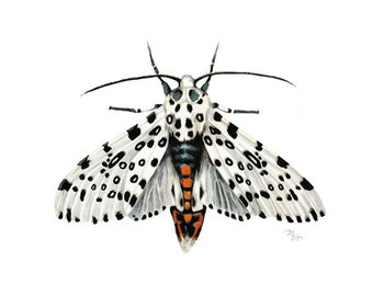 White Moth Watercolor Giclee Print - Leopard Moth Portrait - White Tiger Moth Decor - Giant Leopard Wall Art