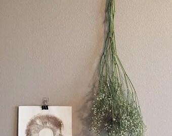 Small Spore Prints