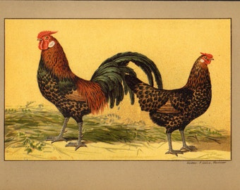 1899 Antique POULTRY lithograph, ROOSTER and HEN, brown chicken
