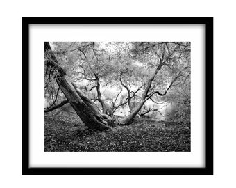 black and white prints, black and white landscape photography, fine art, black and white photography, tree photography, nature photography