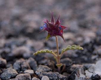 Chia Flower Photo Print