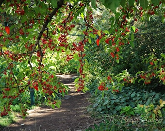 Red Berry Path