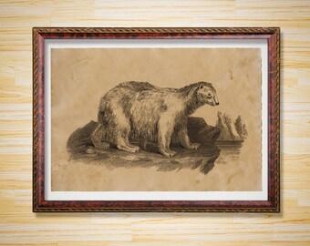 Polar bear poster Animal print Vintage illustration