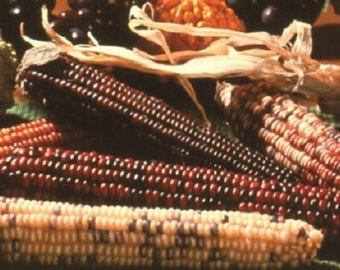 100 Seeds Indian Corn Ornamental Corn FALL DECORATION