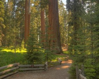 Sequoia Trees, Museum, Cabin, Yosemite, California,