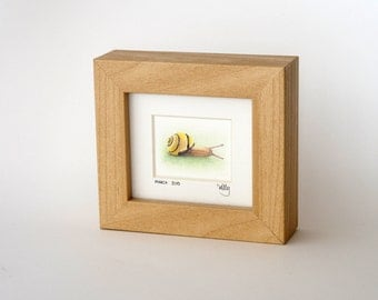 24/30 Grove Snail Original Miniature Framed, Signed and Dated Pencil Drawing