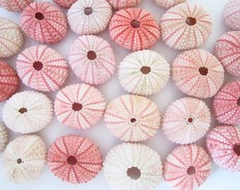 Pink Sea Urchins-Set of 75-Beach Wedding Decor-Sea Urchin Bulk-Beach Wedding Favors-Sea Life Bulk-Sea Urchin Beach Decor-Se Urchin Crafts
