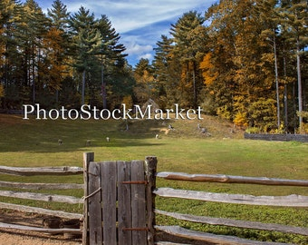 New England Country Field -  Fall Backdrop - Split Rail Fence - Old New England Scene -  Farm Pasture Background - Photography Backdrop