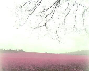 Memory of pink field