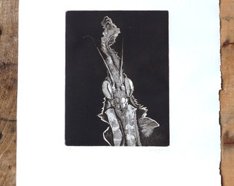 Mantis etching, Hand pulled print, Home decor, Printmaking