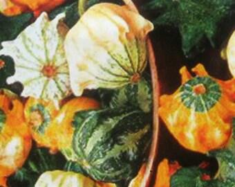 Home grown decorative pumpkin seeds for small pumpkins, heirloom pumpkin seeds, 10 seeds, home decoration pumpkins