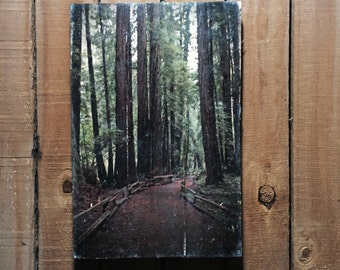 Landscape - Redwoods - Muir Woods - California - 11x17 - Wood Wall Art - Handmade Wood Sign - Home Decor