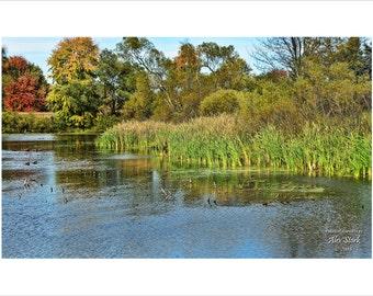 Wetland Splendor
