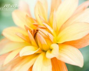 Dahlia Flower Peach Flower